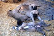 Notizie dalla nostra veterinaria dal CCF!