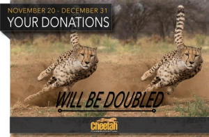 Le donazioni di fine anno vengono raddoppiate da oggi al 31 dicembre!
