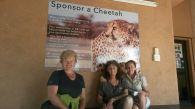 Sponsor a Cheetah!