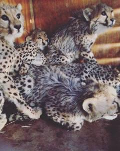 Ecco i 5 cuccioli salvati dal CCF!
