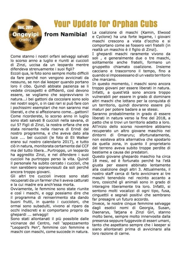 2CheetahUpdates_OrphanCubs_Dec_2017_Italian